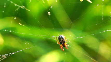Spider on cobweb against greenery