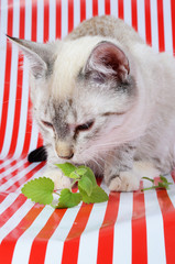 kitten and catnip