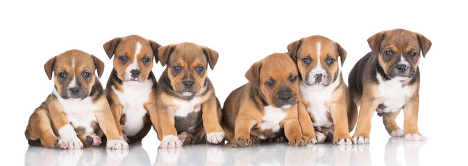 six adorable puppies together