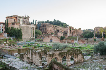 Foro Romano and Palatine in Rome