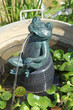 fontaine grenouille - 66101636