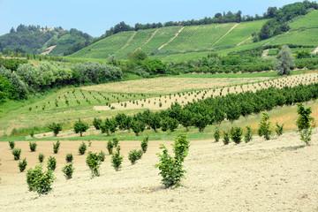 Noccioleti in Piamonte