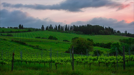 Early morning over vineyards, Tuscany, Italy, timelapse