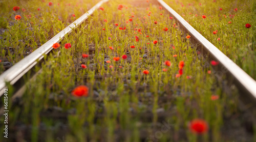Foto op Canvas Poppy poppy perspective