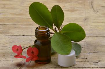 Euphorbia milii Christusdorn Молочай Миля Wilczomlecz okazały