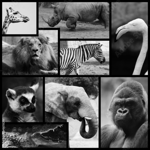 ANIMALES SALVAJES DE ÁFRICA B Y N