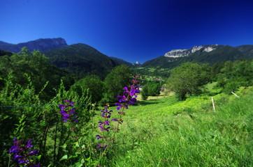 paysage montagnard - chartreuse