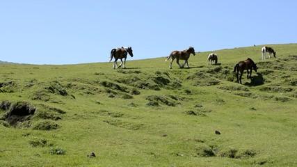 阿蘇の高原の馬