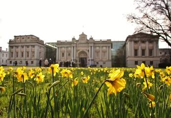 Daffodils at Greenwich