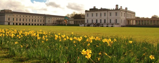 Daffodils at Greenwich