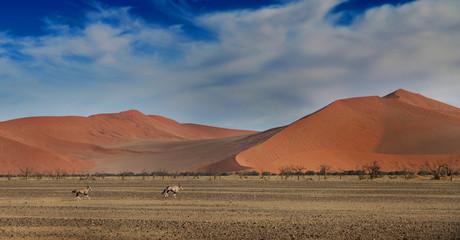 desert dunes with Oryx antelope