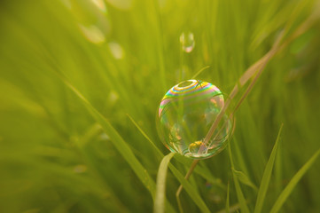 Natural background bubble lies on grass
