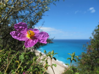 wildblumen am strand