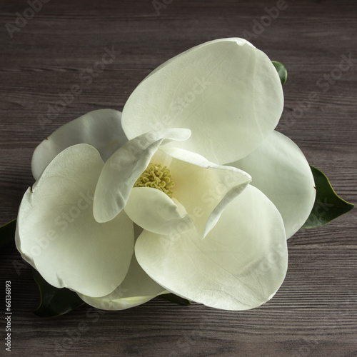 canvas print picture Magnolia