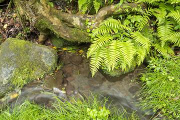 植物と菊池渓谷に流れ込む沢