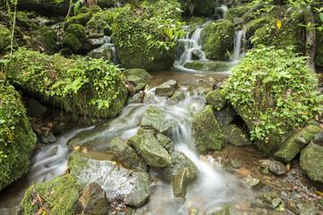 菊池渓谷に流れ込む沢