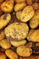 Patate da agricoltura biologica