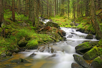 mountain river in green Carpathian forest