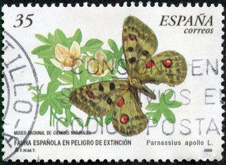 stamp printed in Spain shows Apollon  papillon
