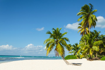 Beautiful tall palm trees and white sandy beach