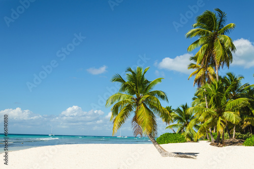 Tuinposter Eiland Beautiful tall palm trees and white sandy beach