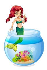 A mermaid inside the aquarium
