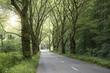 Allee mit Platanen und Straße im Frühjahr