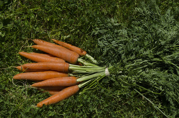 carottes en botte
