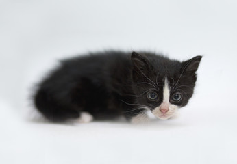 gatto piccolo su sfondo bianco