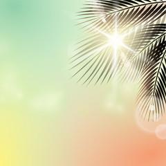 Sommerlicht - Palme