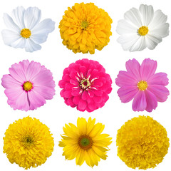 Beautiful flower set isolated.
