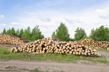 Wood fell industry. Stack birch and pine tree logs