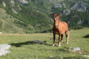 Yegua joven de frente en pradera de montaña.