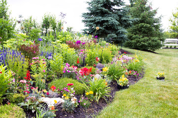 Colorful landscaped celosia flower garden