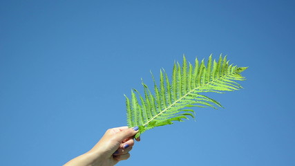Girl hand hold fern plant leaf on background of blue sky