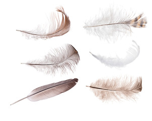isolated set of sin feathers