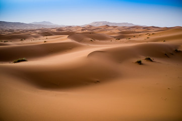 beautiful sand dunes in the Sahara near Merzouga, Erg Chebbi, Mo