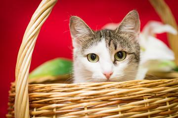 Кошка в корзине на красном фоне