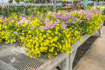 Colorful Hanging Plants in a Plant Nursery