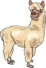 alpaca animal cartoon illustration