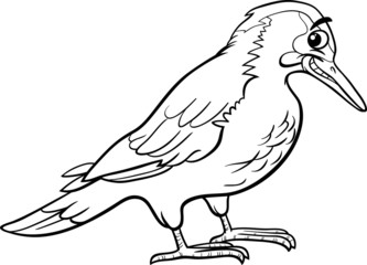 yaffle bird animal coloring page