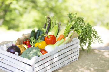 収穫した新鮮な野菜