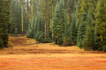 Yosemite Meadow and Forest