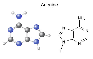 Chemical structural formula and model of adenine