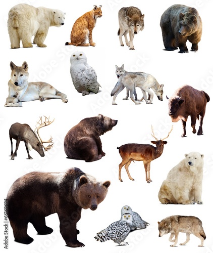 Foto op Aluminium Bison Set of european animals. Isolated over white