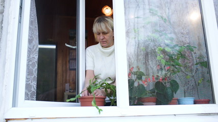 Woman planting a houseplant into clay pot on the windowsill
