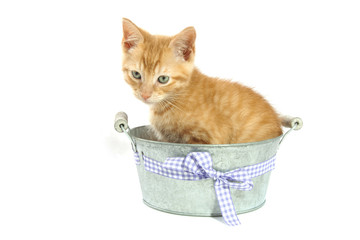 Kitten in bucket