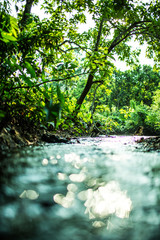 The bokeh river in forest