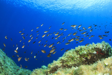 Fish in reef in Mediterranean Sea