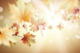Autumn background - 66178001